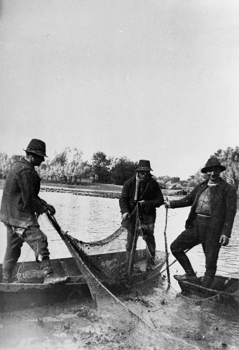 Fishermen pulling out fishing net, early 20th century
