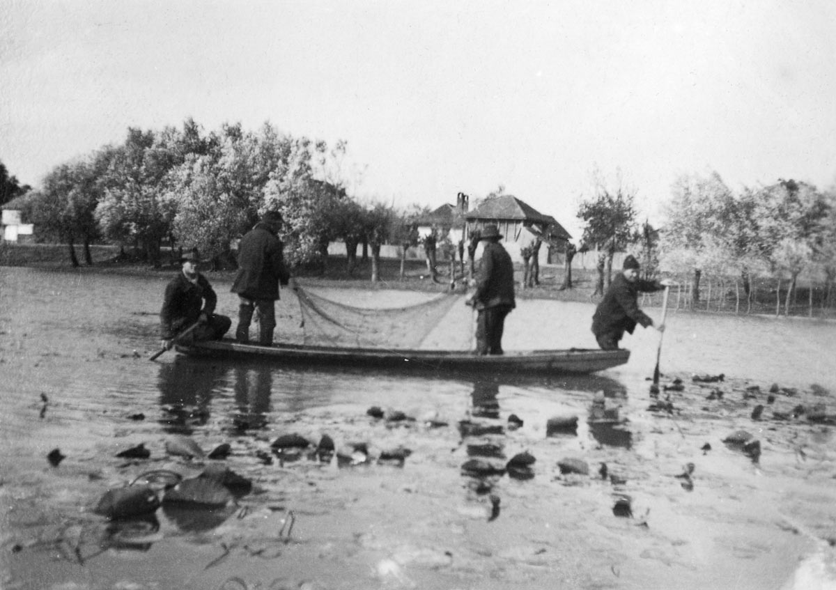 Fishermen pulling out fishing net, Smederevo